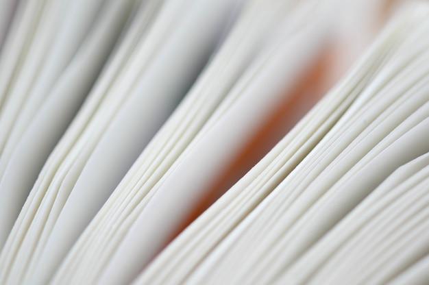 Folhas brancas de um livro