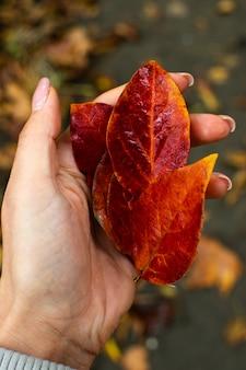 Folhas brilhantes de laranja em mãos, outono