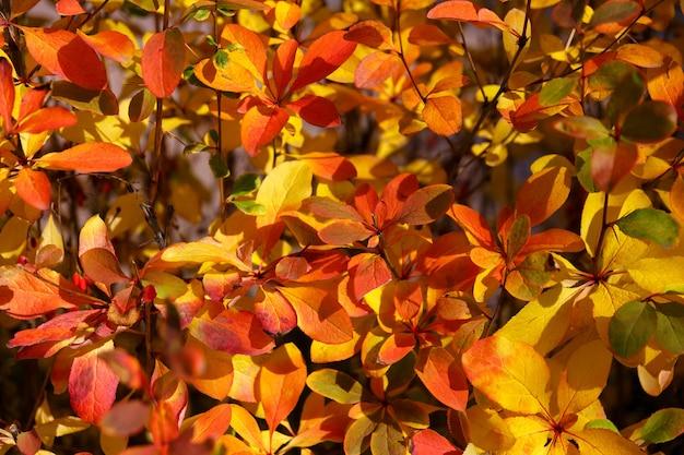 Folhas brilhantes de outono de fundo natural close-up