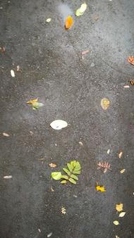 Folhas caídas caídas no asfalto molhado