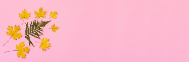 Folhas caídas de samambaia e bordo em fundo rosa, banner do conceito de outono, vista plana, vista de cima, espaço de cópia