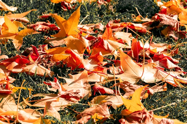 Folhas caídas em um parque no outono.