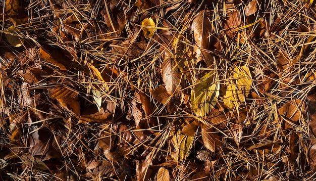 Folhas caídas molhadas, árvores decíduas estendidas no chão após a última chuva, detalhes da temporada de outono, floresta decídua mista