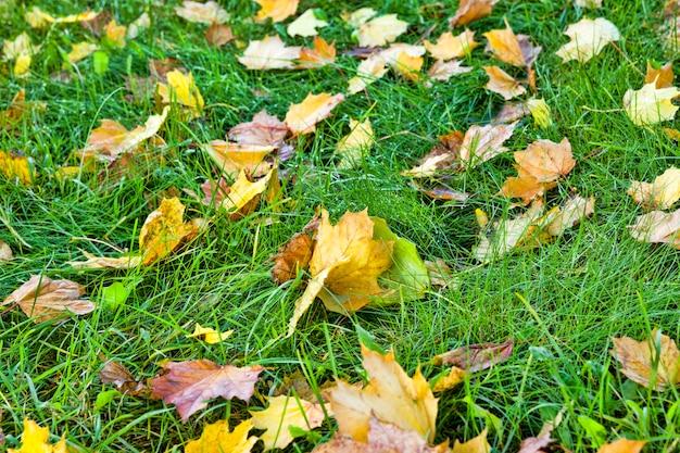 Folhas caídas na grama no outono