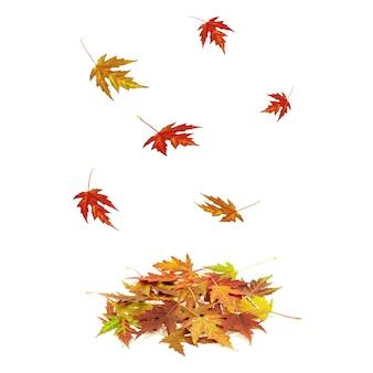Folhas caindo coloridas brilhantemente isoladas no branco