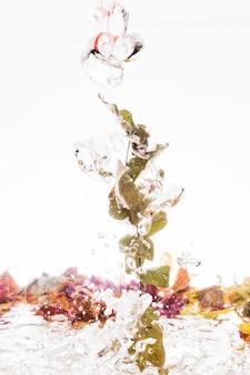 Folhas caindo na água