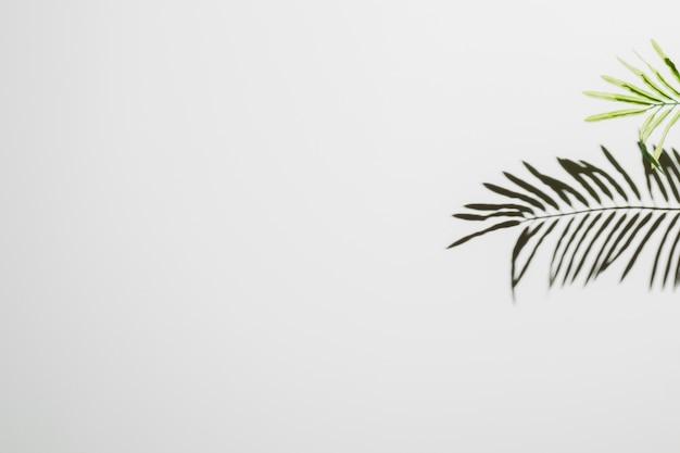 Folhas caindo no fundo da parede branca