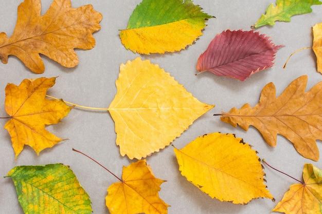 Folhas coloridas caídas de árvores em um fundo cinza