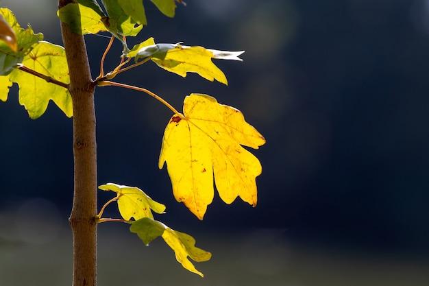 Folhas coloridas de outono em um fundo escuro com tempo ensolarado