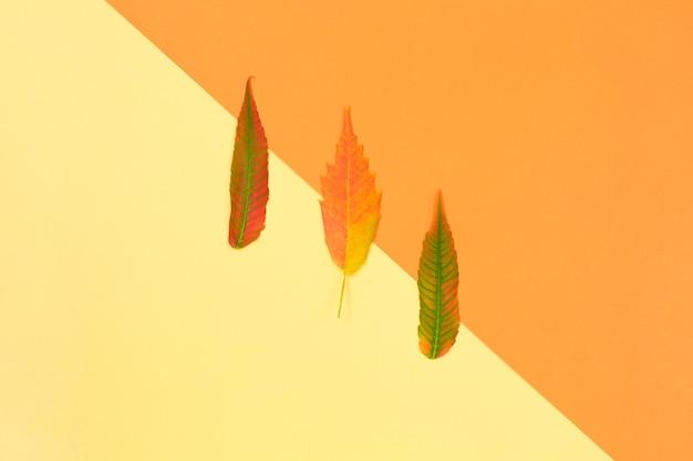 Folhas coloridas de outono no conceito mínimo de fundo amarelo