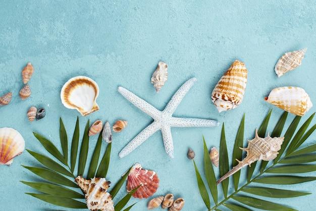 Folhas com estrela do mar e mariscos