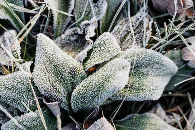 Folhas congeladas no inverno