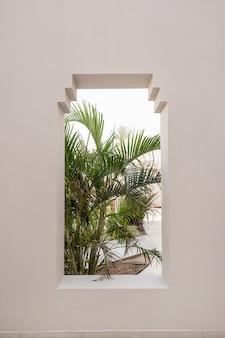 Folhas da árvore da bela planta palmeira tropical na janela do edifício bege.