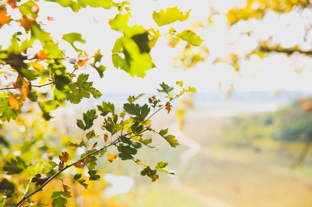 Folhas da árvore de outono. fundo de textura. foto de bela natureza. plano de fundo sazonal.