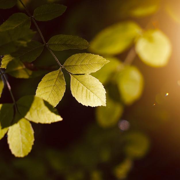 Folhas da árvore verde e galhos da natureza no outono, fundo verde