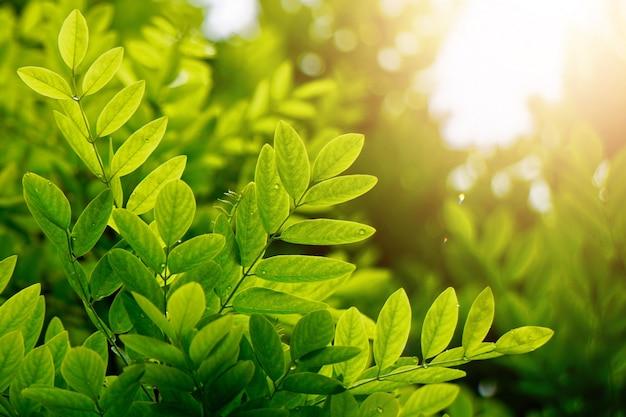 Folhas da árvore verde texturizadas no outono na natureza, fundo verde