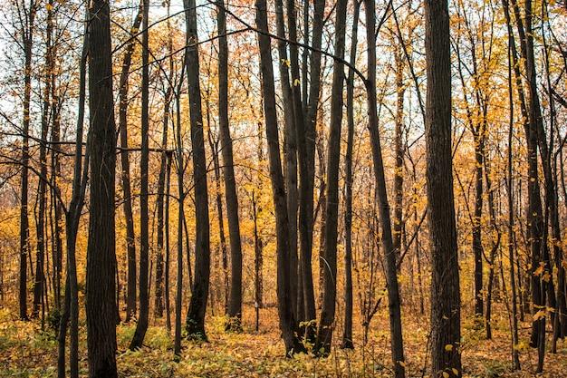 Folhas da floresta