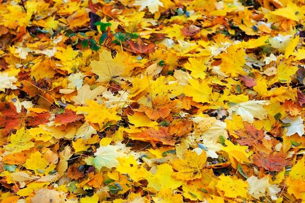 Folhas da laranja do outono do grupo do fundo. exterior