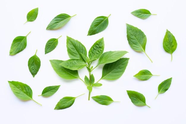Folhas da manjericão doce no branco.