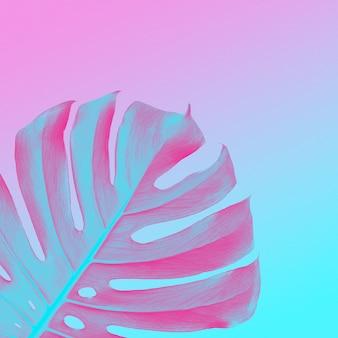 Folhas da selva tropical de monstros em um duotônico ultravioleta, rosa e azul. estilo tropical neon com lugar para texto, design moderno