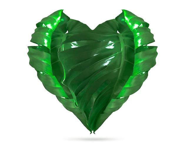 Folhas dadas forma coração de monstera isoladas. isolado no fundo branco.