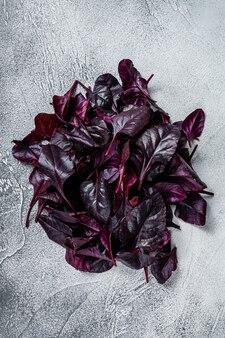 Folhas de acelga suíça ou salada mangold