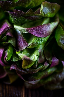 Folhas de alface de carvalho vermelho orgânico