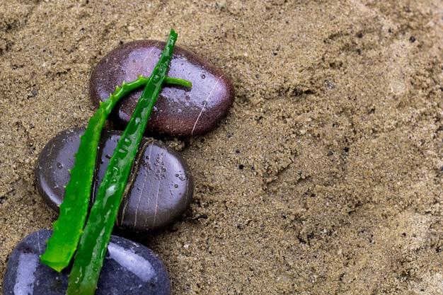 Folhas de aloe vera e pedras molhadas em um fundo de areia