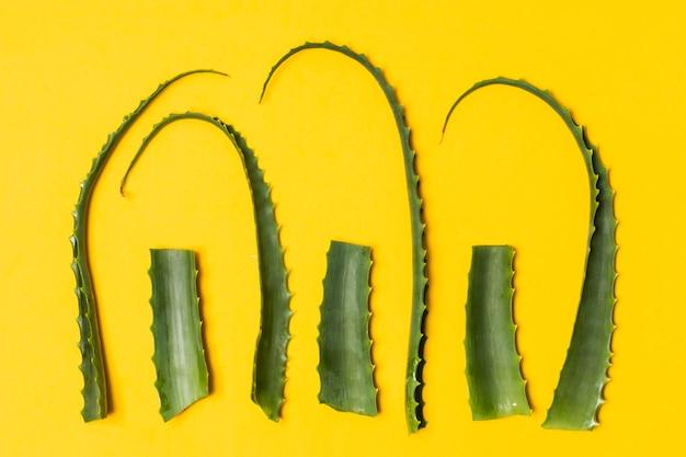 Folhas de aloe vera