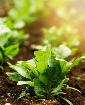 Folhas de alto ângulo verde com raios de sol