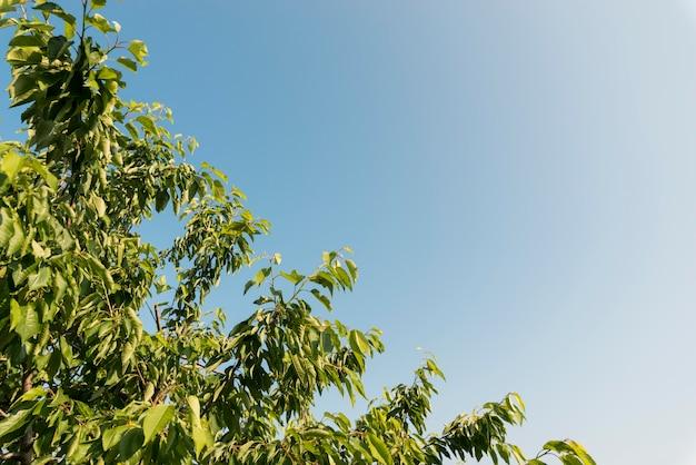 Folhas de árvore de baixo ângulo