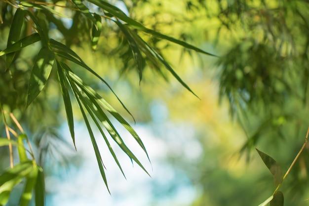 Folhas de árvore na natureza bokeh
