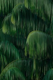 Folhas, de, árvore palma, fundo