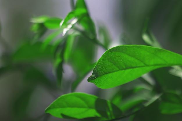 Folhas de árvore para fundo de natureza e salvar o conceito verde