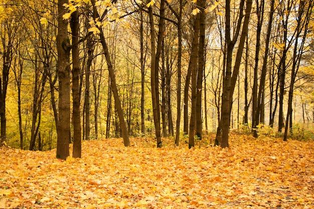 Folhas de árvores de parque e floresta de outono e outono. cores amarelas e laranja na natureza. lituânia