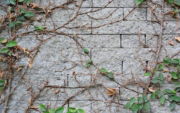 Folhas de árvores e hera cobertas por paredes de tijolos e raízes de árvores