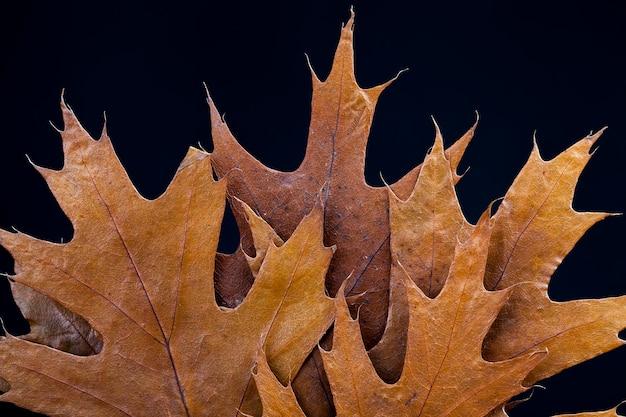 Folhas de árvores secas, folhagens de árvores empilhadas e secas para armazenamento e decoração
