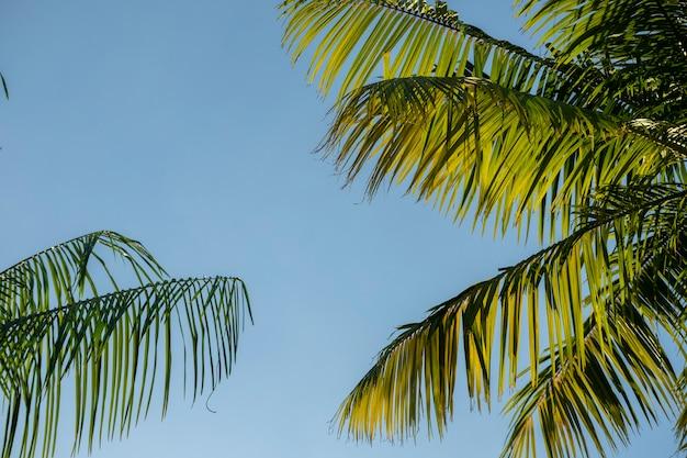 Folhas de árvores verdes em fundo de céu azul de verão
