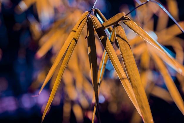 Folhas de bambu botânico