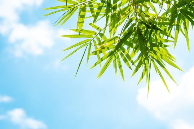Folhas de bambu e céu azul