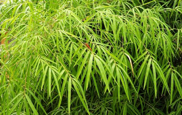 Folhas de bambu e uma libélula vermelha em dias de chuva