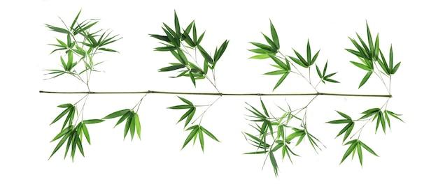 Folhas de bambu em fundo branco