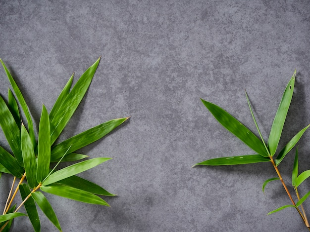 Folhas de bambu em fundo cinza.