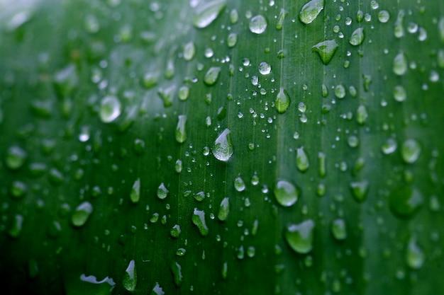 Folhas de bananeira árvores tropicais floresta textura papel de parede