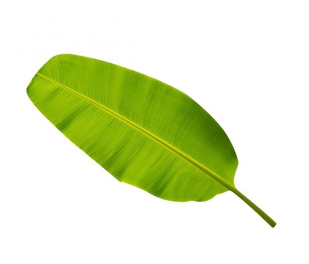 Folhas de bananeira verde em fundo branco isolado