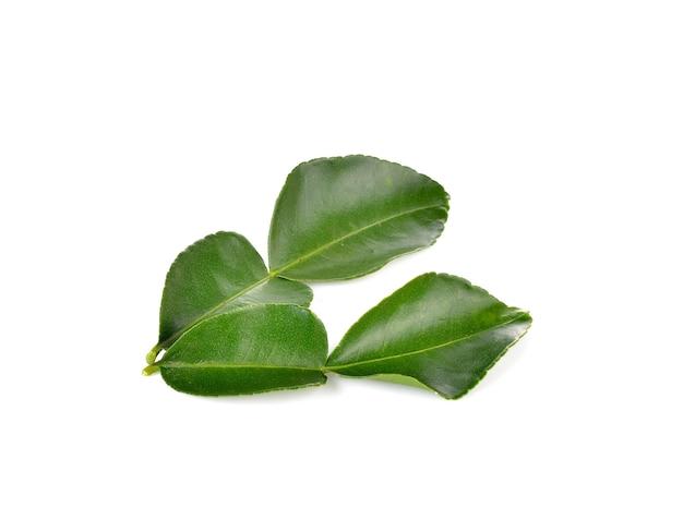 Folhas de bergamota na parede branca
