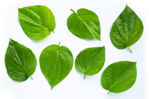 Folhas de betel verde, piper betle fresco no fundo branco