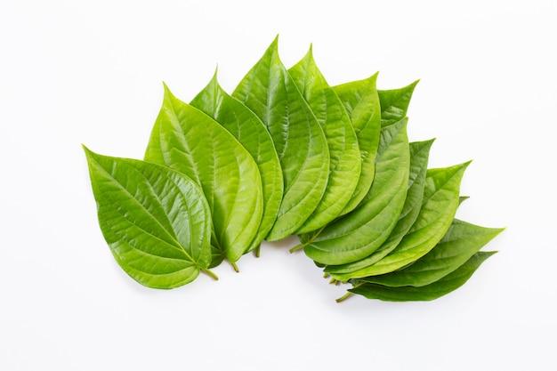 Folhas de bétele verde, piper fresco betle em branco