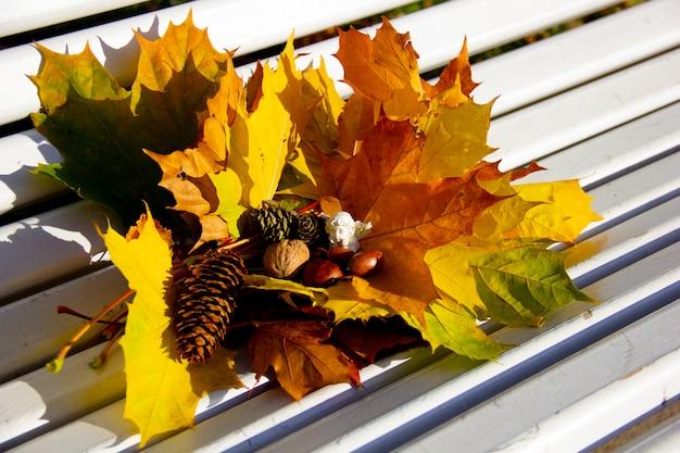 Folhas de bordo amarelas