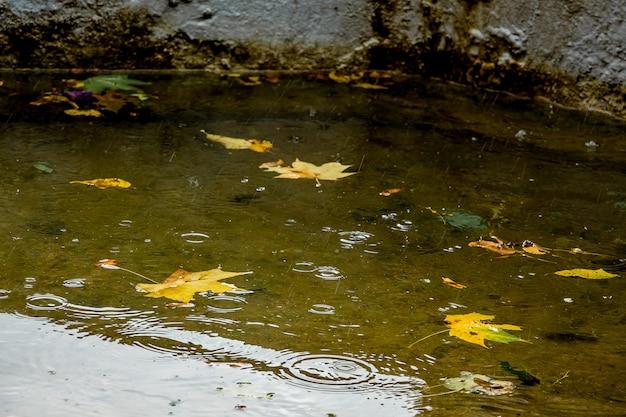 Folhas de bordo amarelo na água do rio durante a chuva. dia chuvoso de outono